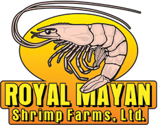 Royal Mayan Shrimp Farm Belize